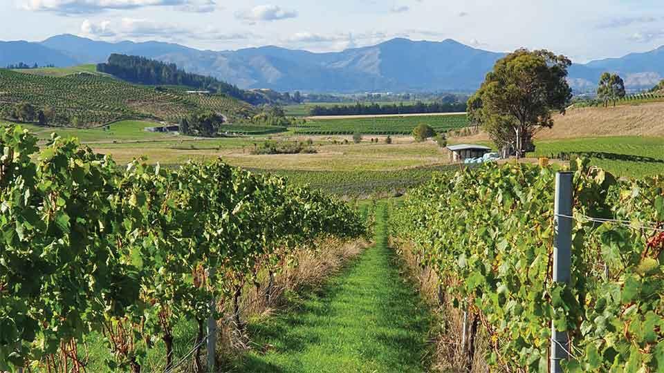 New Zealand Wine Dinner